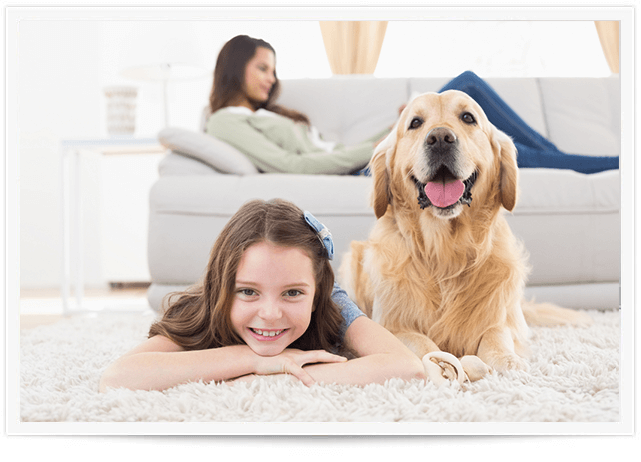 pet urine cleaning edmond ok