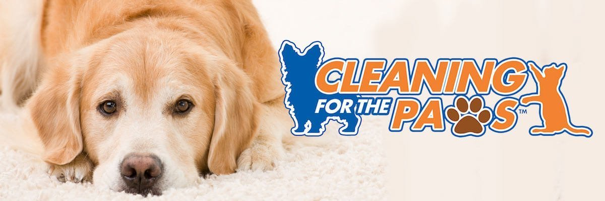 chem-dry oklahoma city cleaning for the paws