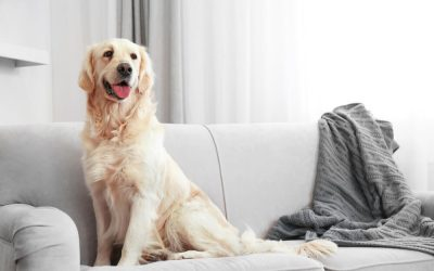 Pet Urine Removal As Part Of Your Spring Cleaning